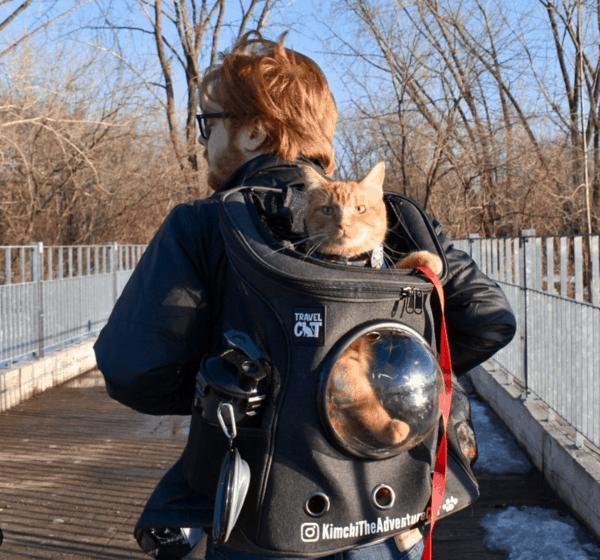 Exemplo de passeio com gato na mochila