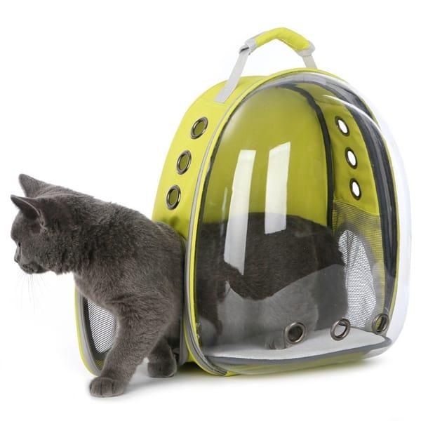Gato saindo da mochila