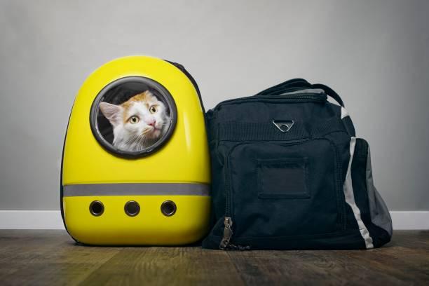 Ideia de como viajar com seu gato