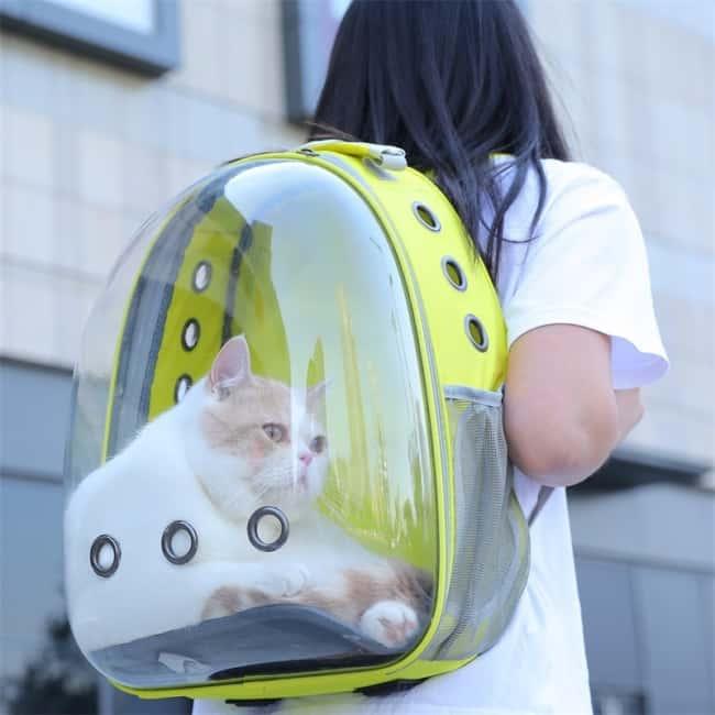 O gato fica acomodado na mochila