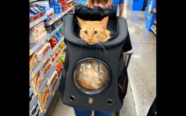 Passeio no supermercado com a mochila para gato