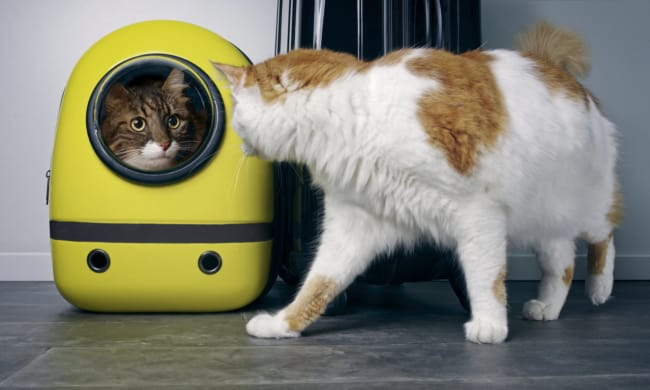 Pode ajuda na fase de adaptacao com outro gato