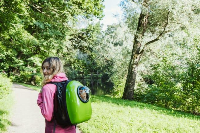 Sugestao de mochila verde para carregar gato