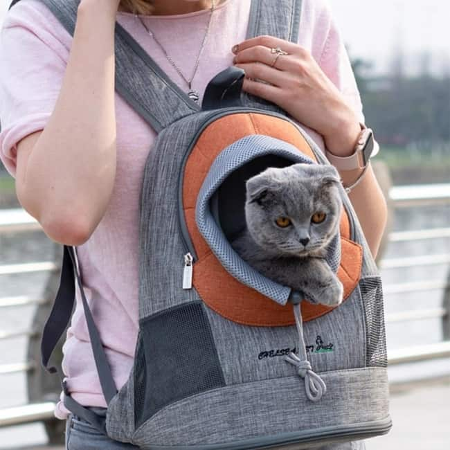 Tipo diferente de mochila para gato