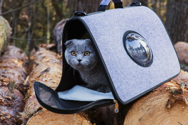 mochila para gato cinza