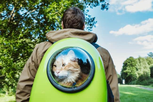 mochila para gato verde
