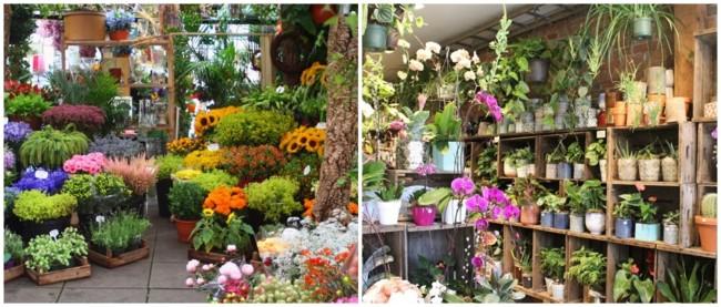 dicas e nomes de floricultura