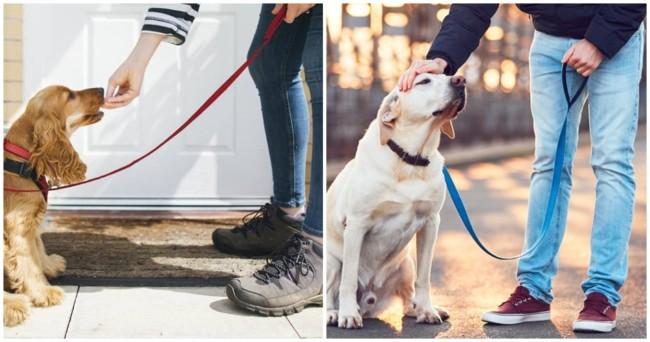 trabalho como dog walker para menor de idade