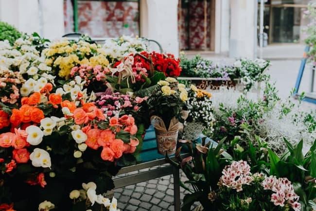 nomes simples para floriculturas