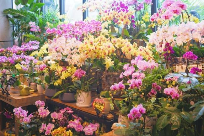 ideias de nomes criativos para floricultura