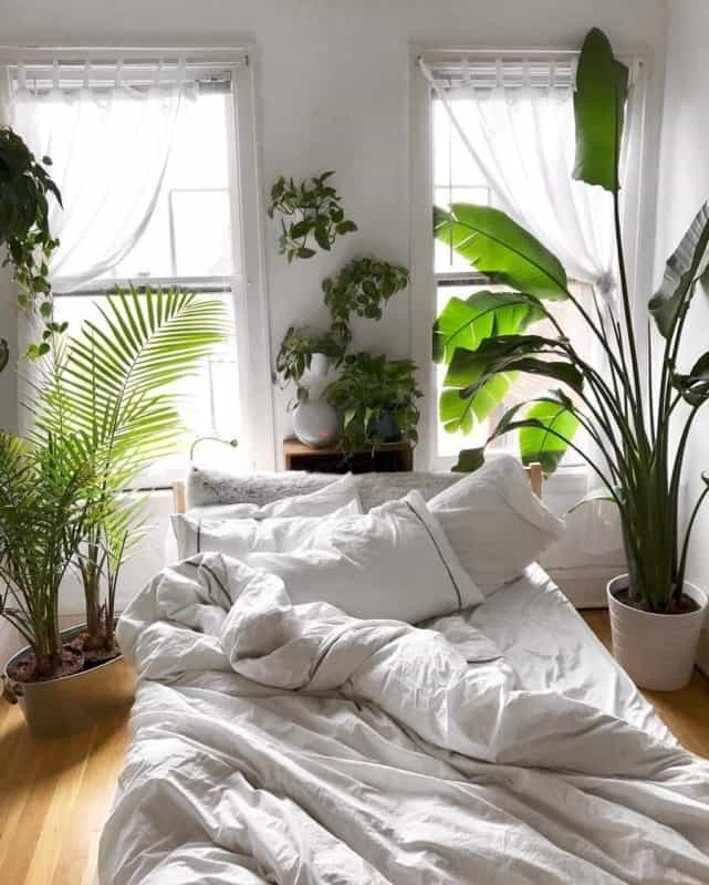 quarto urban jungle