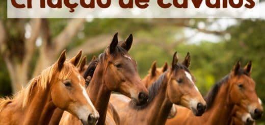 criacao de cavalos