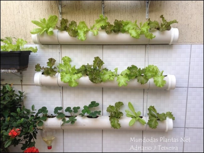 como plantar alface no cano de PVC