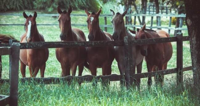 dicas para criar cavalos e lucrar