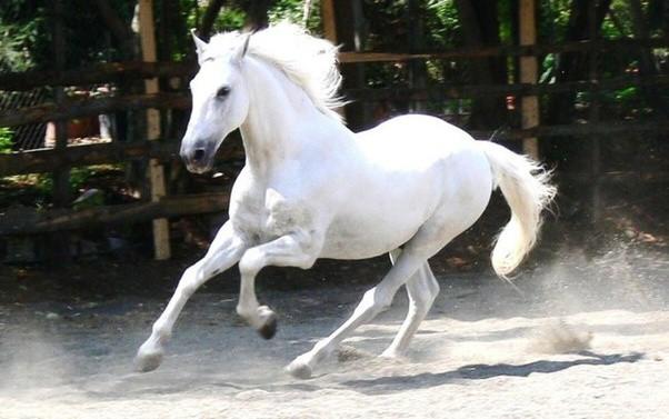dicas para criar cavalos