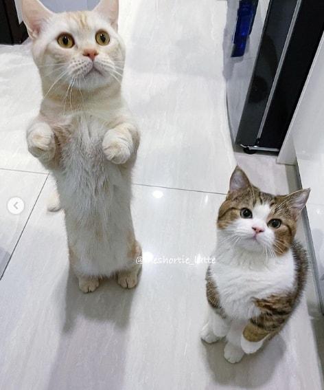 pagina de gatinhos para seguir no Instagram