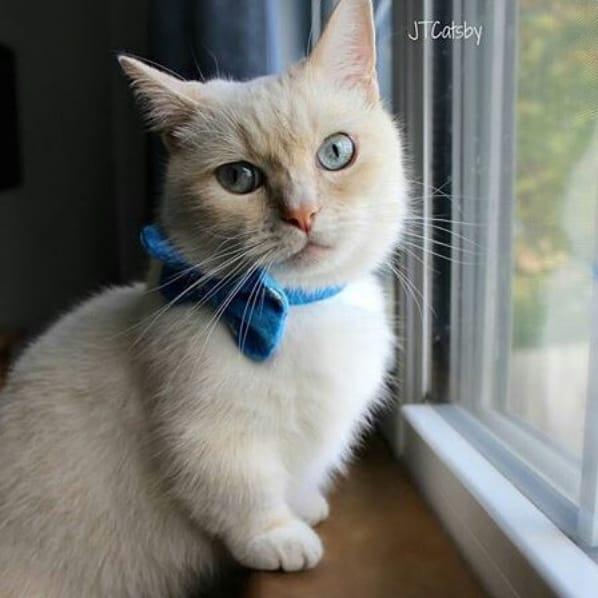 perfil no Instagram de gatos Munchkin