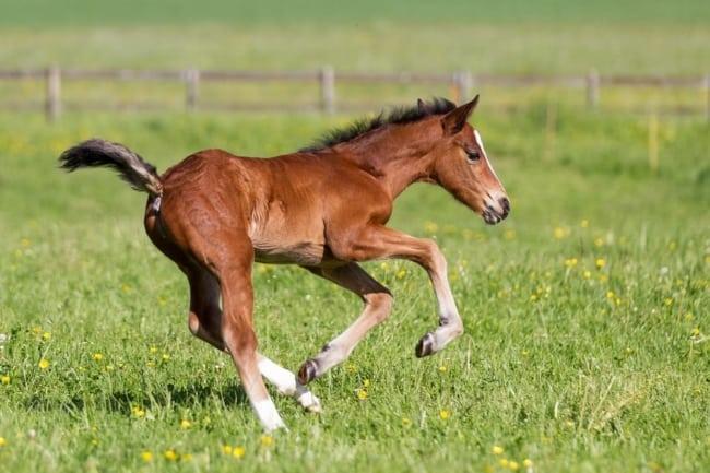 como criar cavalos