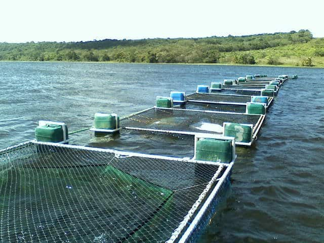estrutura para piscicultura