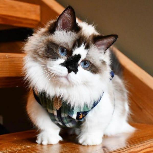 gato albert no instagram
