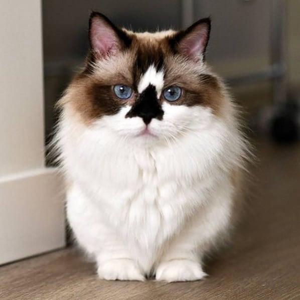 perfil de gato para seguir