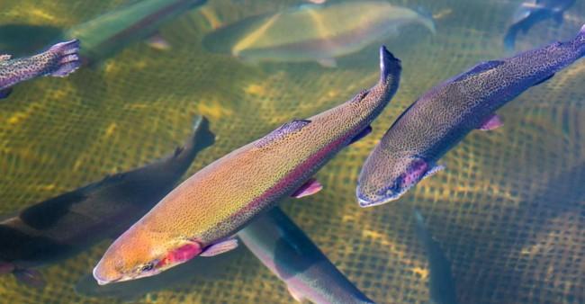 dicas para fazer piscicultura