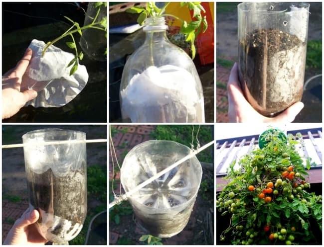 passo a passo para plantar tomate em garrafa pet
