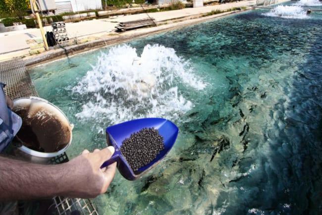 dicas e cuidados com piscicultura