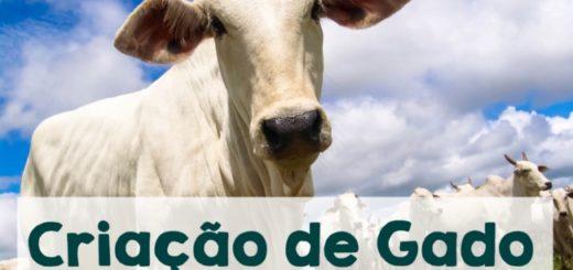 criacao de gado