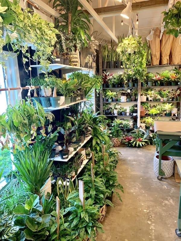como escolher nomes para lojas de plantas