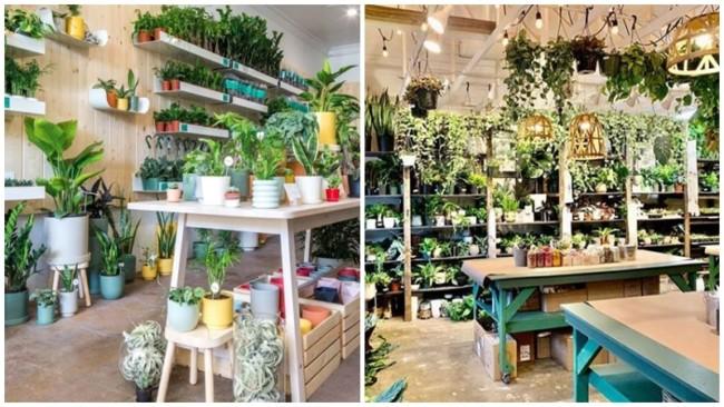dicas para escolher nomes de lojas de plantas
