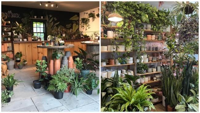 lista de nomes para lojas de plantas