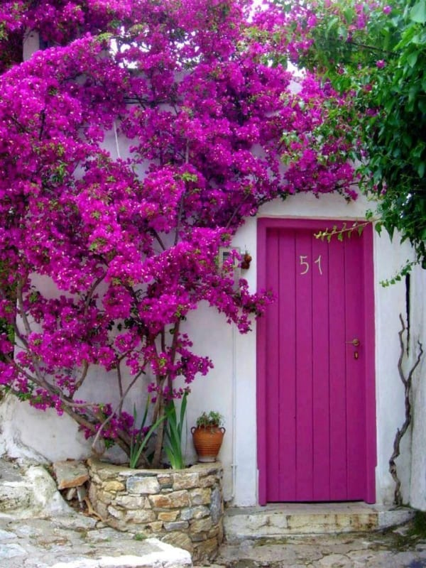 porta externa com cor magenta