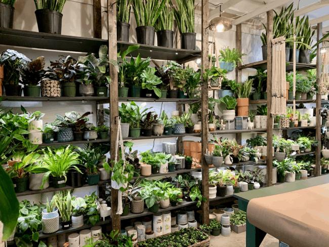 nomes criativos para lojas de plantas