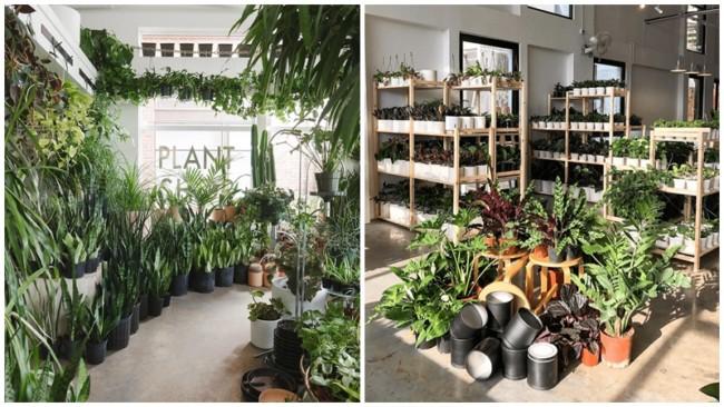 lista de nomes diferentes para loja de plantas