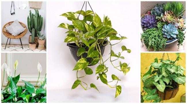 plantas faceis de cuidar