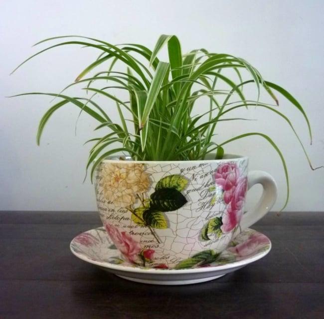 como usar planta clorofito na decoracao