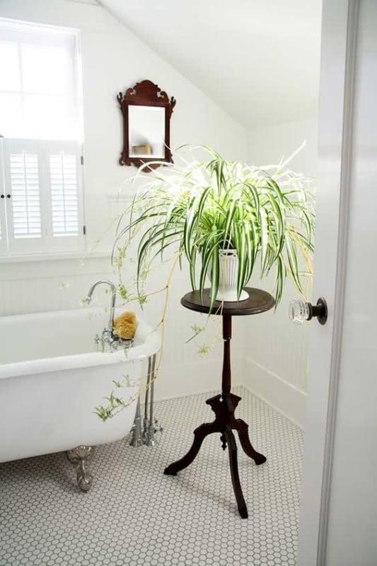 decoracao de interiores com planta no banheiro