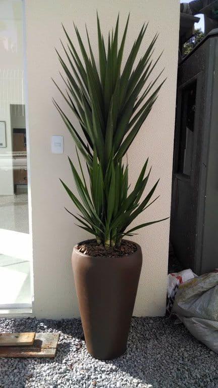 planta ornamental facil de cuidar