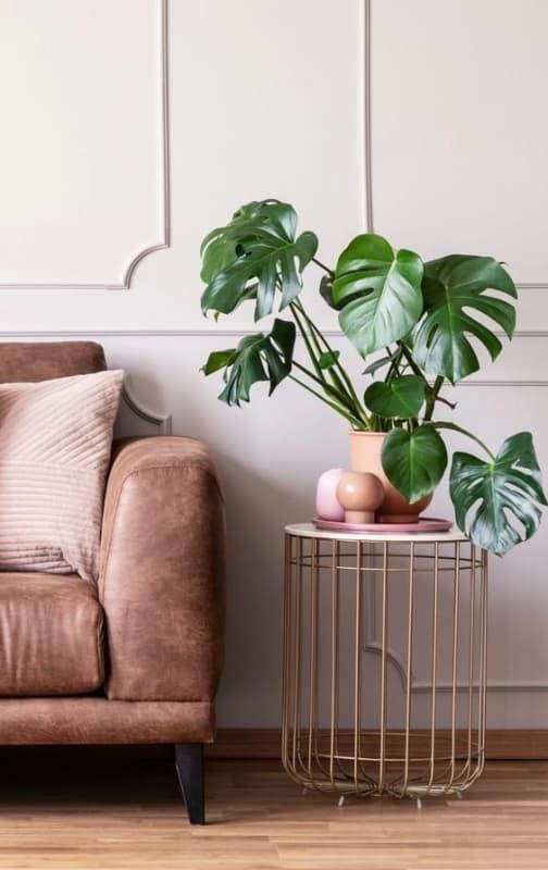 vaso com costela de adao ao lado do sofa