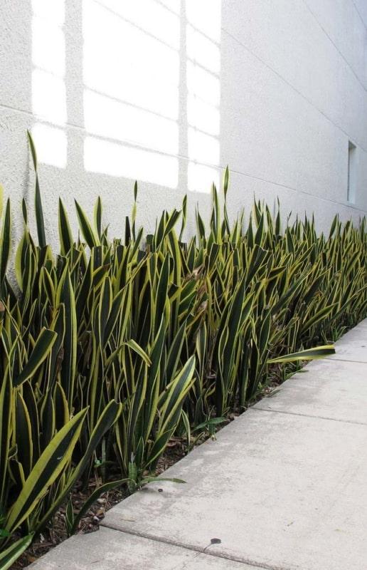 planta facil de cuidar para jardim