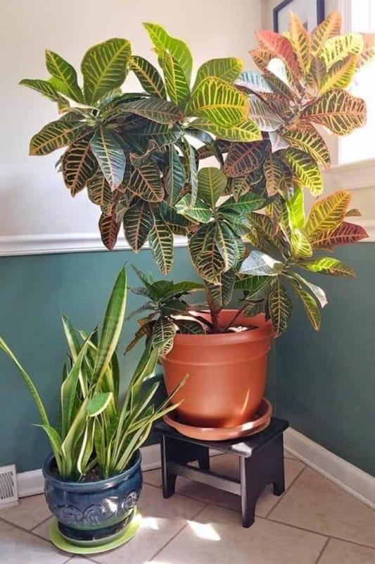 folhagem para decoracao dentro de casa