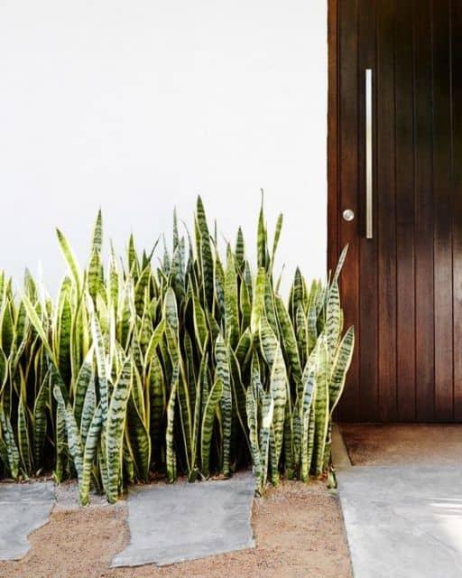 jardim com planta de sol facil de cuidar