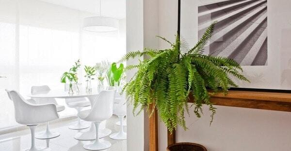planta pendente facil de cuidar