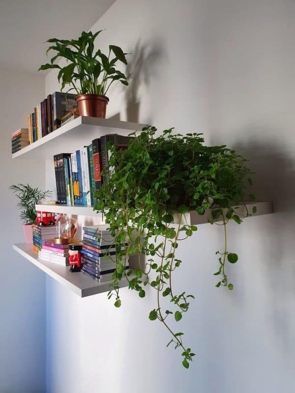 planta pendente para decorar prateleira dentro de casa