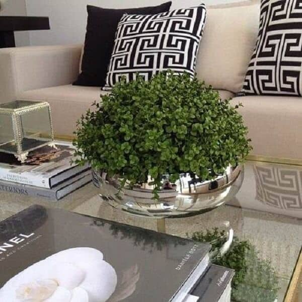 mesa de centro com planta para dentro de casa