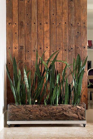 como usar Espada de Sao Jorge na decoracao dentro de casa