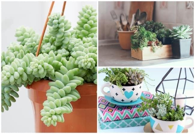 especies de plantas faceis de cuidar