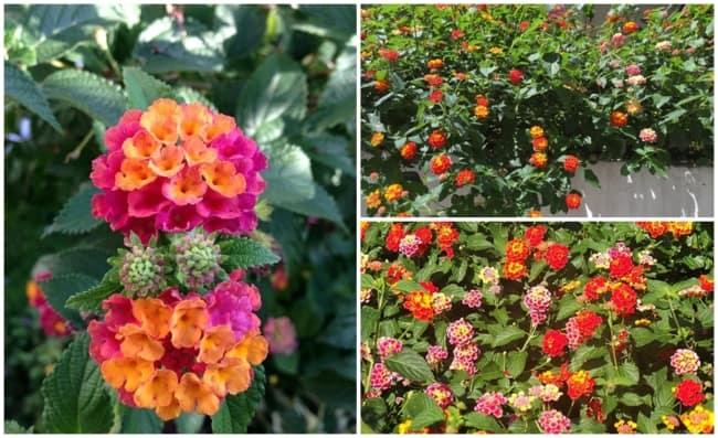 jardim com flores que gostam de sol