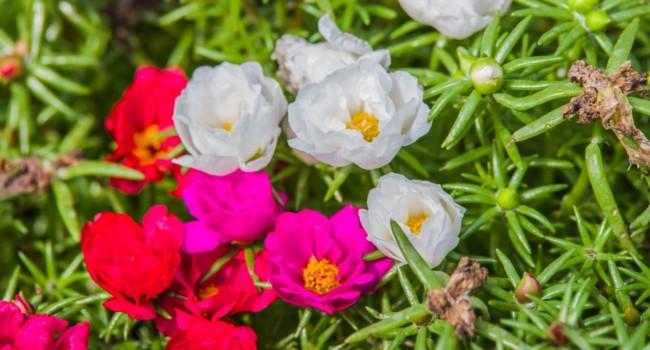 planta com flor para jardim com sol